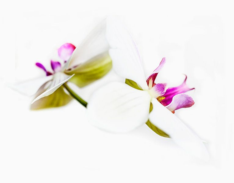 Orchideeën in kleur