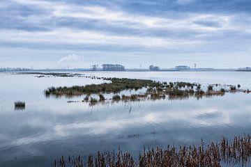 landschap Noordwaard Biesbosch van Eugene Winthagen