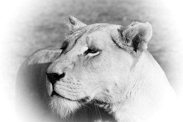 Stolze Weiße Löwen Dame sw 4882 von Barbara Fraatz