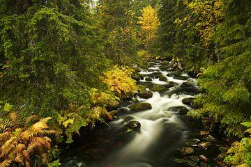 Herfst rivier, Fulufjallet Nationaal Park, Zweden van Gerhard Niezen Photography