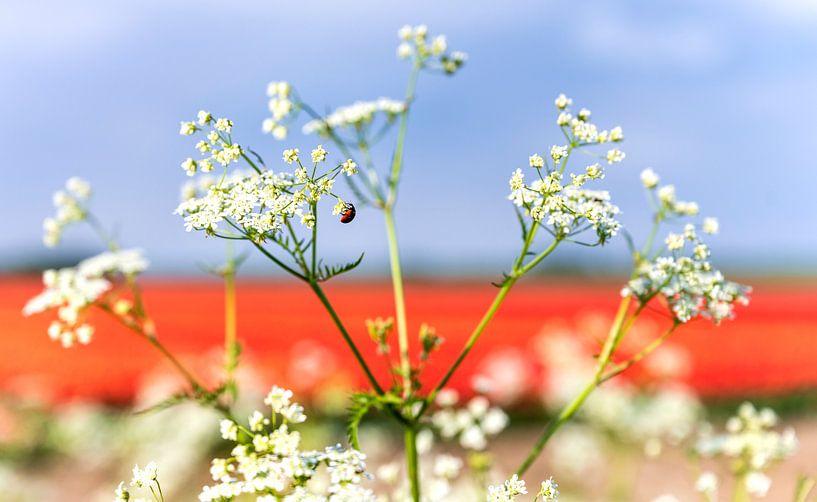 Rood wit en blauw in de natuur 1 van Anouschka Hendriks
