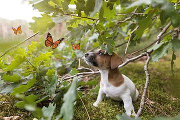 Jack Russell Terriër Puppy kijkt naar vlinders van Simon Peeters
