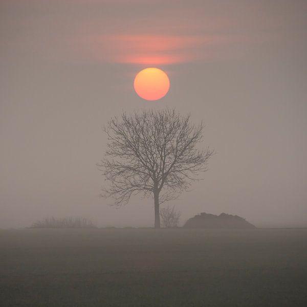 Morning has broken van Peter Bijsterveld