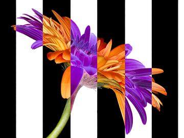 bloem in kleur of zwartwit met bloem? van Klaartje Majoor