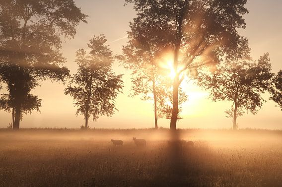 Misty magic van Olha Rohulya