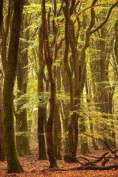 Dansende bomen van Francis Dost