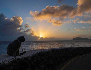 Auch Katzen kommen in den Himmel von Gideon Gerard