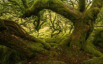 L'endroit le plus hanté de Dartmoor sur Joris Pannemans - Loris Photography
