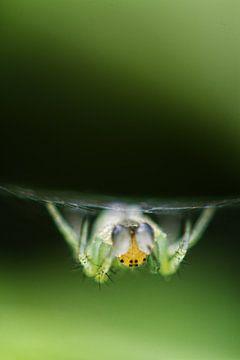 Spinne von Malte Pott
