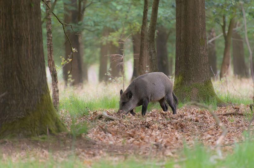 Mama Wildschwein von Tania Perneel