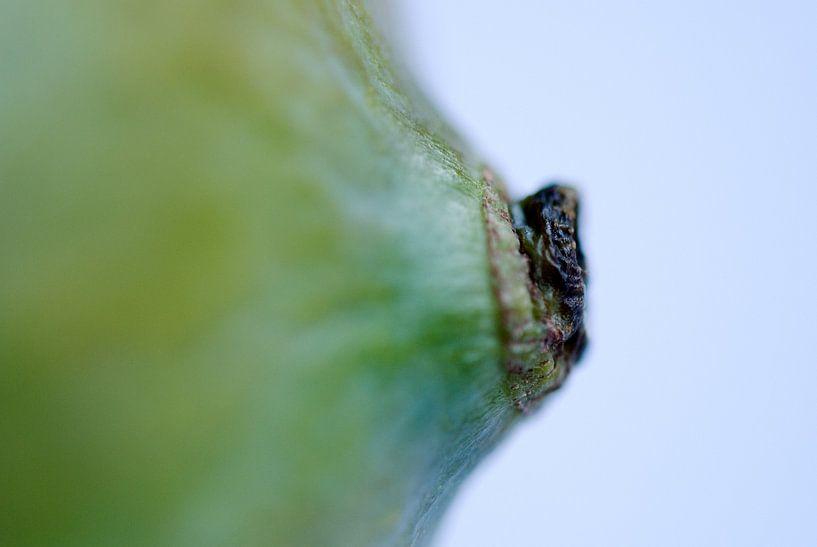 Mango nipple van Remke Spijkers