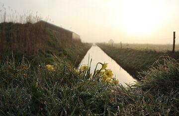 Texel Landschap 030 van Starworks Lien van der Star