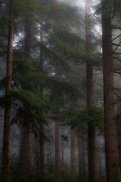 Bomen in mistig boslandschap van Kelvin Middelink