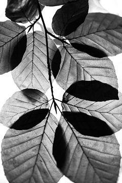 Design by nature (9992) van Tot Kijk fotografie: natuur aan de muur
