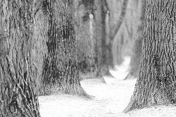 Allee mit alten Pappelbäumen im Winter mit Schnee in Regensburg von Robert Ruidl