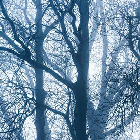 Bäume im Herbst von Inge van den Brande