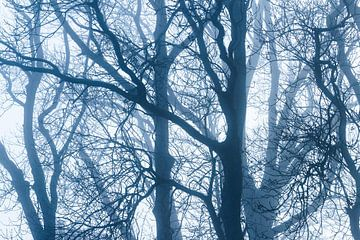 Bomen in de herfst van Inge van den Brande