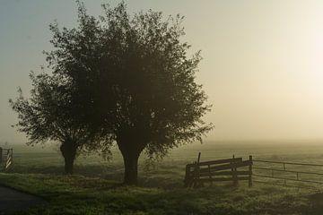 Knotwilgen in de mist