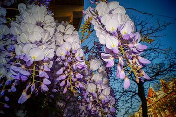 Bloemen van Jane Changart