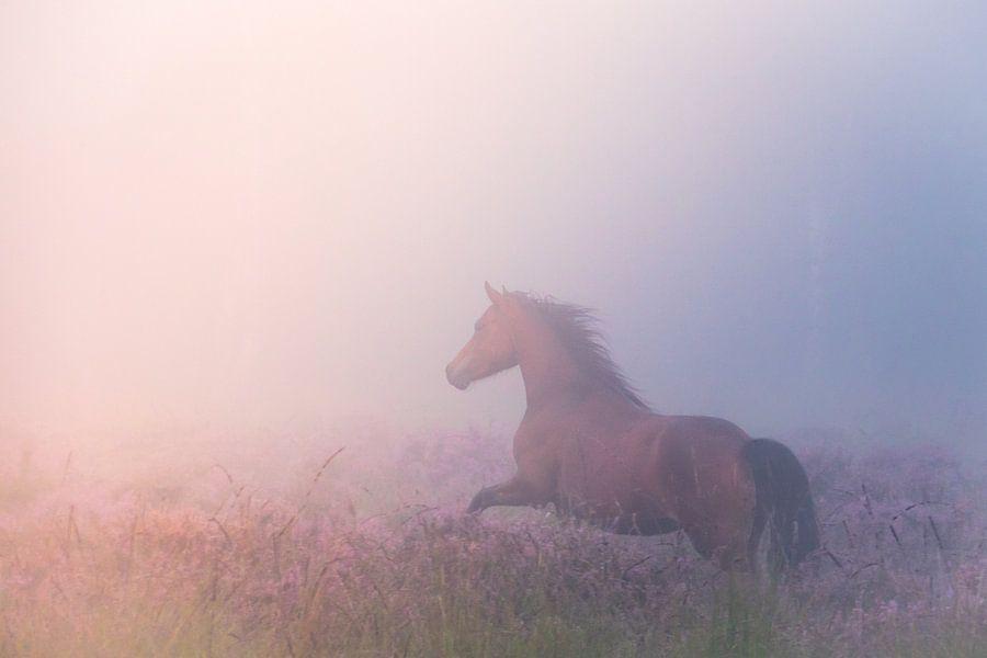 Galopperend paard op de mistige heide van Milou Oomens