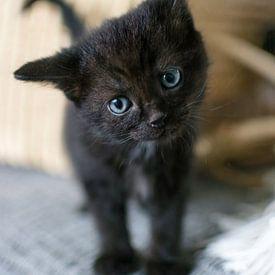 Nieuwsgierig zwarte kitten met rieten mand op achtergrond van Christa Thieme-Krus
