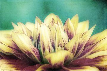 Flower Dream von Angela Dölling