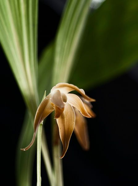 Enlightened Orchid van Isabel Alba Gonzalez
