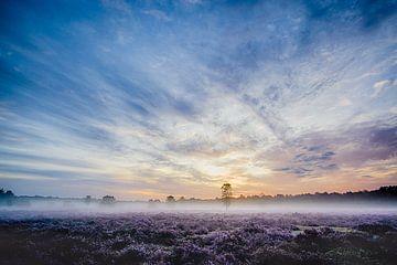 Sonnenaufgang über das Heidekraut von Joran Quinten