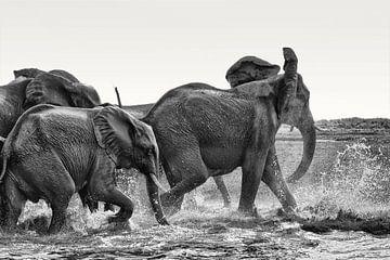 Afrikanische Elefanten (Loxodonta-africana) trinken und spielen im Wasser. von Tjeerd Kruse