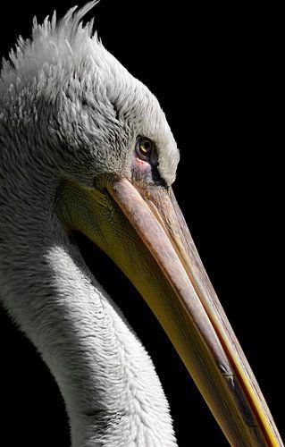 The Pelican portrait van