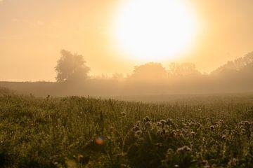 goldener Morgen von Tania Perneel