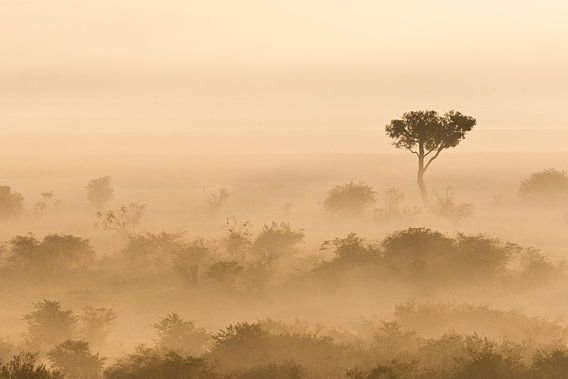 Mistige vroege ochtend in de Afrikaanse savanne van Caroline Piek