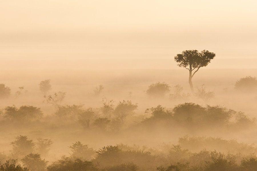 Mistige vroege ochtend in de Afrikaanse savanne