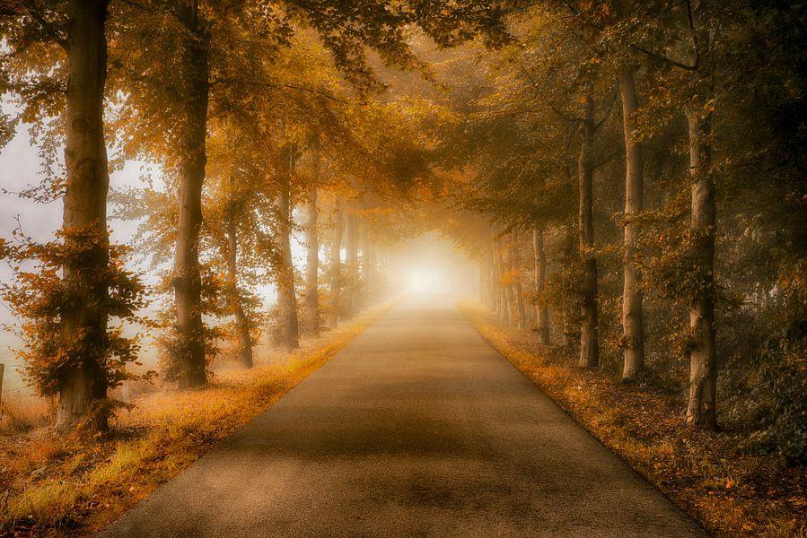 Laan met bomen in de herfst van Elroy Spelbos