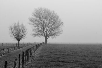 Bomen in de polder von René Groenendijk