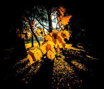 Bladeren in tegenlicht von Alex Hiemstra