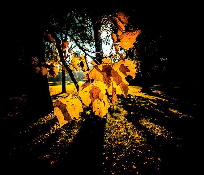 Bladeren in tegenlicht van Alex Hiemstra