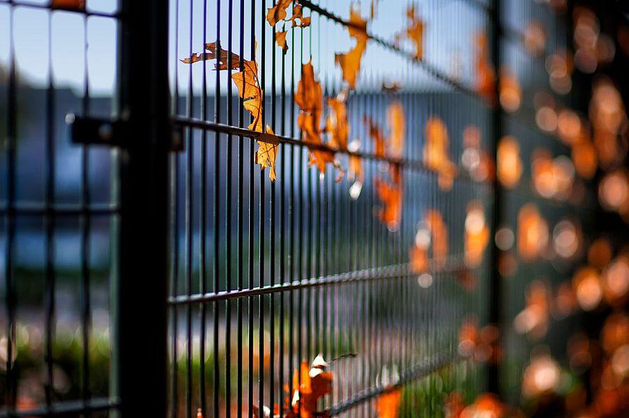 herfstbladeren van Huibert van der Meer