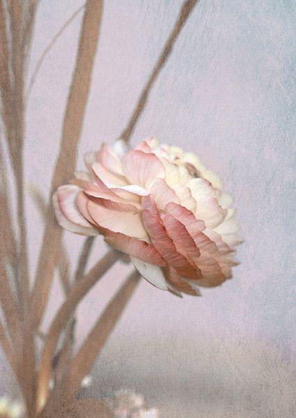 Pastell Ranunkelblüte van Rosi Lorz