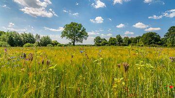 Sommerlandschaft mit wilden Blumen von Kok and Kok