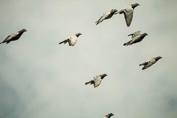 Duivenvlucht van Bastiaan Veltien