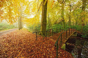 brug in een bos sur Dirk van Egmond