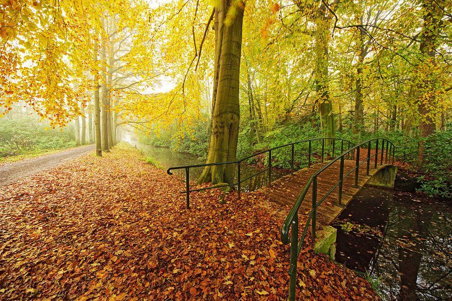 brug in een bos van Dirk van Egmond
