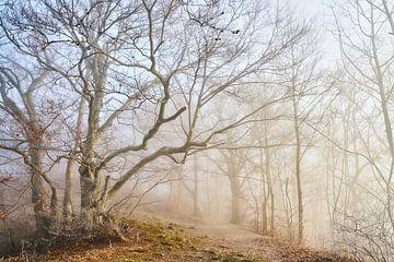Wintermorgen im Wald von Max Schiefele