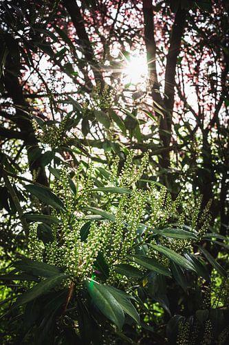 Verse groene boom met zonneschijn en bloesem