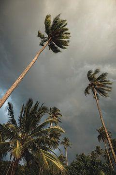 Palmbomen op tropisch eiland- travel print van Olivier Bessems Photography