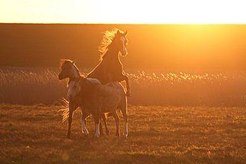 Paarden in laatste zonlicht van Pier de Haan