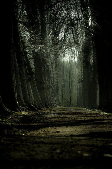 The future path