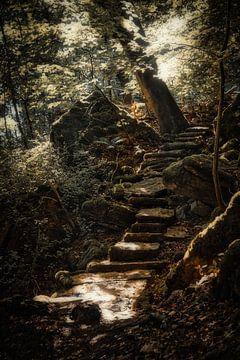 Eine Waldtreppe von Rik Verslype