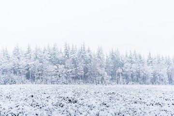 De natuur in het wit van Albert Lamme